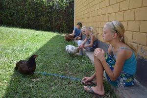 My haole mazungu kids walking and talking to their chickens.