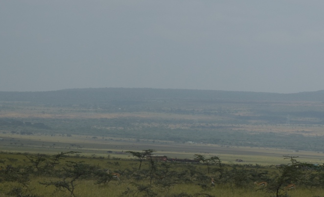 Gazelles we saw on our way thru masai land in the Great Rift Valley